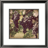 Vintage Grape Vines III