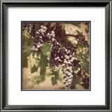 Vintage Grape Vines IV