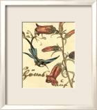 Hummingbird Reverie I