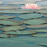 Lily Pool III