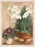Grande Orchidée I