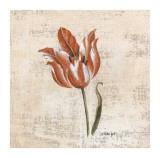 Tulipes IV
