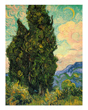 Cypresses  c1889