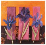 3 Iris