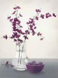 Royal Blossom II