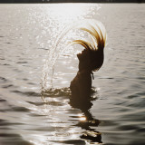 Silhouette of Woman Splashing Hair Out of Water
