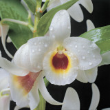 Close-Up of an Orchid