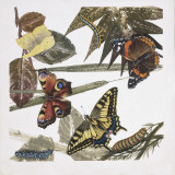 Butterflies and Larva  Illustration