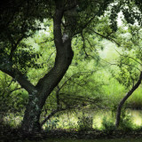 Trees in a Lush Green Park
