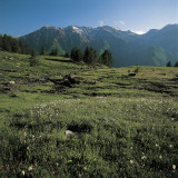Wild Flowers on a Landscape  Orsiera-Rocciavre Nature Park  Chisone Valley  Torino Province