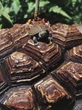 Close-Up of a Turtle on an Elephant's Foot Plant (Dioscorea Elephantipes)
