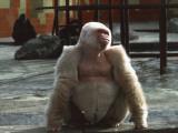 Albino Gorilla in a Zoo  Barcelona  Catalonia  Spain