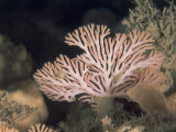 Close-Up of Bryozoa Underwater