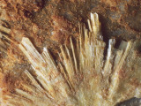 Close-Up of Uranophane Rock