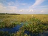 Usa  Florida  Everglades National Park