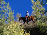 Cowgirl Rides on Horseback in Field