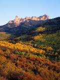 Usa  Colorado  Uncompahgre National Forest  Cimarron Ridge  Panoramic View of a Dense Forest