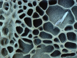 Rock Pattern with Honeycomb-Like Caverns