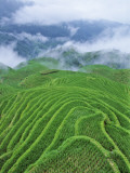 China  Guangxi Province  Longsheng  Terraced Rice Paddies in Mist