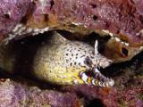 Hungry Dragon Morey Eel