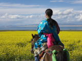 China  Qinghai Province  Tibetan Girl Riding on Horse in the Canola Field Near Qinghai Lake