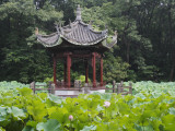 China  Pavilion and Lotus Pond