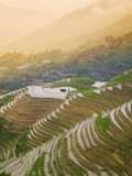 China  Guangxi Province  Longsheng  Rice Terraces in Early Morning Mist