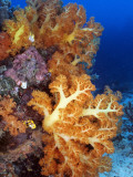 Bright Orange Appendages of an Aquatic Plant Growing Atop Coral Reefs in the Brilliant Blue Ocean