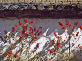 China  Yunnan Province  Lijiang  Red Flowers  Black Tiles and White Wall of Naxi People's House