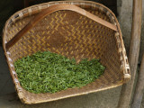 China  Fresh Tea Leaves in the Bamboo Basket