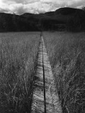 A Narrow Footbridge across a Bog