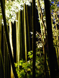 Arashiyama Bamboo Light Up
