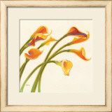 Callas in the Wind I