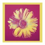 Daisy  c1982 (Fuchsia and Yellow)