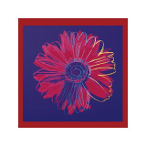Daisy  c1982 (Blue and Red)