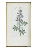 Almanach de Flore : Sapin &#224; fleurs bleues