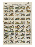 Alphabets d'animaux et d'oiseaux