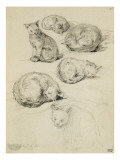 Album factice : Etudes de six chats