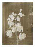 Une branche de fleur d'orchidées ; fond intérieur maison (fonds Gallé)