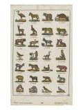 Planche animalière