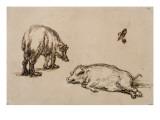 Un verrat debout  une truie couchée et étude d'un oeil et d'une oreille