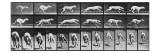 Album sur la décomposition du mouvement, Animal Locomotion: chien Giclée par Eadweard Muybridge