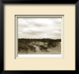 Ocracoke Dune Study II