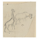 Girafe et rhinoc&#233;ros