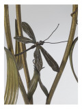 Floor Lamp Up Decorated with Reeds and Dragonflies