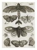 Planche d'insectes