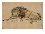 Lion au repos