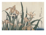 Iris et sauterelle