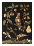 Panneau : Fruits et oiseaux