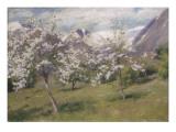 Norvège  verger en fleur (Harland) 1898